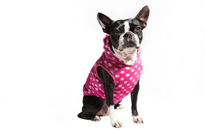 Dog Clothes and Accessories including coats and jackets from the Hot Dog Store